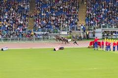 raça de 100m Fotos de Stock