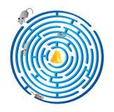 Raça de rato. labirinto Fotografia de Stock