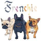 Raça do buldogue francês de cão doméstico do esboço ilustração do vetor