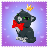 Raça do gato gato Preto-branco Imagem de Stock