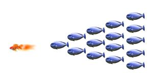 Raça do Goldfish Fotografia de Stock