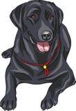 Raça labrador retriever do cão do esboço do vetor Imagens de Stock