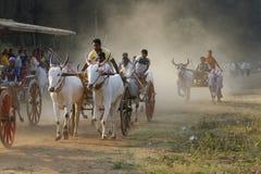 Raça tradicional do carro de boi Imagem de Stock