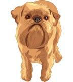 Raça vermelha de Bruxelas Griffon do cão do esboço ilustração stock