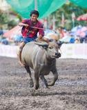 Raças anuais do búfalo em Chonburi 2009 Fotos de Stock