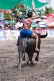 Raças anuais do búfalo em Chonburi 2009 Foto de Stock