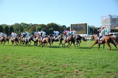Raças de cavalo Imagem de Stock