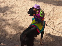 Raças do cão Imagens de Stock