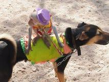 Raças do cão Imagem de Stock Royalty Free