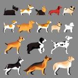Raças do cão ajustadas Ilustração lisa do vetor Pets a coleção dos ícones ilustração royalty free