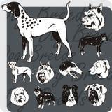 Raças do cão - grupo do vetor Imagem de Stock