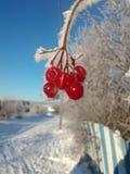 Raças frias da beleza do russo imagens de stock