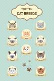 Raças pasteis do gato da parte superior dez ilustração stock