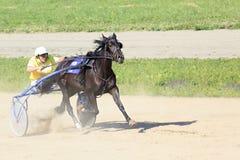 Raças trotar no hipódromo Sibirskoe Fotos de Stock Royalty Free