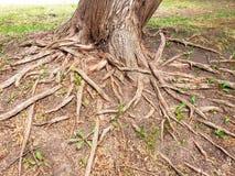 raíces foto de archivo