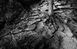 raíces Fotos de archivo