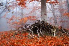 raíces Foto de archivo libre de regalías