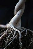 raíces Fotos de archivo libres de regalías