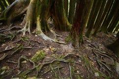 raíces Fotografía de archivo