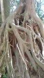 raíces Imágenes de archivo libres de regalías