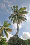 raíces de la palma Fotografía de archivo libre de regalías