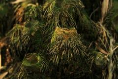 Raíces de los bambúes foto de archivo libre de regalías
