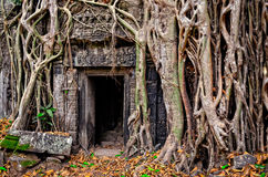 Raíces de piedra antiguas de la puerta y del árbol del templo Foto de archivo libre de regalías
