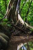 Raíces del árbol Fotografía de archivo