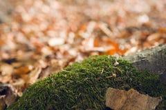 Raíces del árbol con el musgo imagenes de archivo