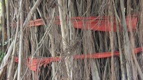 Raíces del árbol con el paño rojo imagenes de archivo