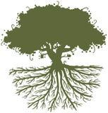 Raíces del árbol de roble ilustración del vector