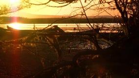 Raíces del árbol en una reserva de naturaleza metrajes