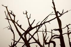 Raíces del árbol refutado y del MES Imagen de archivo