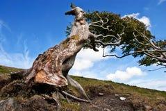 Raíces descubiertas en un árbol muy viejo contra el cielo azul Fotos de archivo