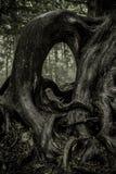 Raíces Gnarled del árbol Imágenes de archivo libres de regalías