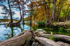 Raíces Gnarly gigantes del árbol de Cypress en Garner State Park, Tejas Fotos de archivo