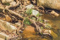 Raíces grandes del árbol y las piedras más grandes en bosque tropical cerca del río Foto de archivo libre de regalías
