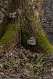 raíces Musgo-cubiertas del árbol en la tierra seca encendida por el sol brillante imagen de archivo libre de regalías