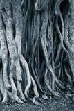 Raíces oscuras del árbol del fondo Imagen de archivo