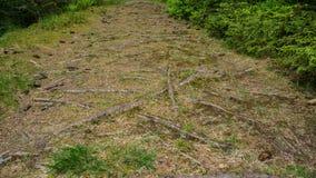 Raíces que crecen por todo la trayectoria cubierta hierba foto de archivo libre de regalías