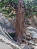 Raíces y cantos rodados del árbol fotos de archivo