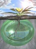Raíces y crecimiento-- Fuerza verde de la vida stock de ilustración