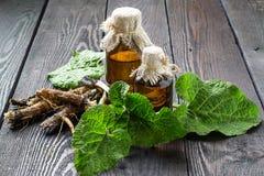 Raíces y hojas del lappa del Arctium de la bardana, aceite de la bardana en bott Fotografía de archivo libre de regalías