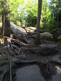 Raíces y rocas Foto de archivo
