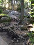 Raíces y rocas del árbol Foto de archivo libre de regalías