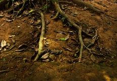 Raíces y suelo Hoja seca Imagenes de archivo