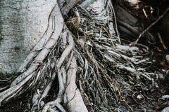 raíz Foto de archivo libre de regalías