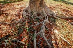 raíz Fotografía de archivo
