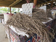 Raíz de Kava fotos de archivo libres de regalías