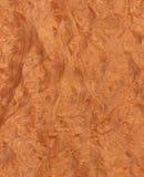 Raíz de Madrone (textura de madera) Fotos de archivo